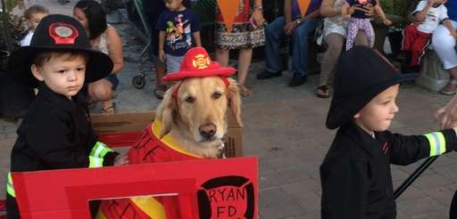 Payton, a Golden Retriever from Wantagh was the