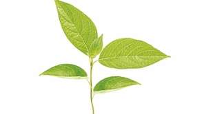 UNPLUGGED: How to Live Mindfully in a Digital