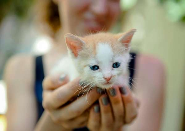 Kittens face a brighter future in the area