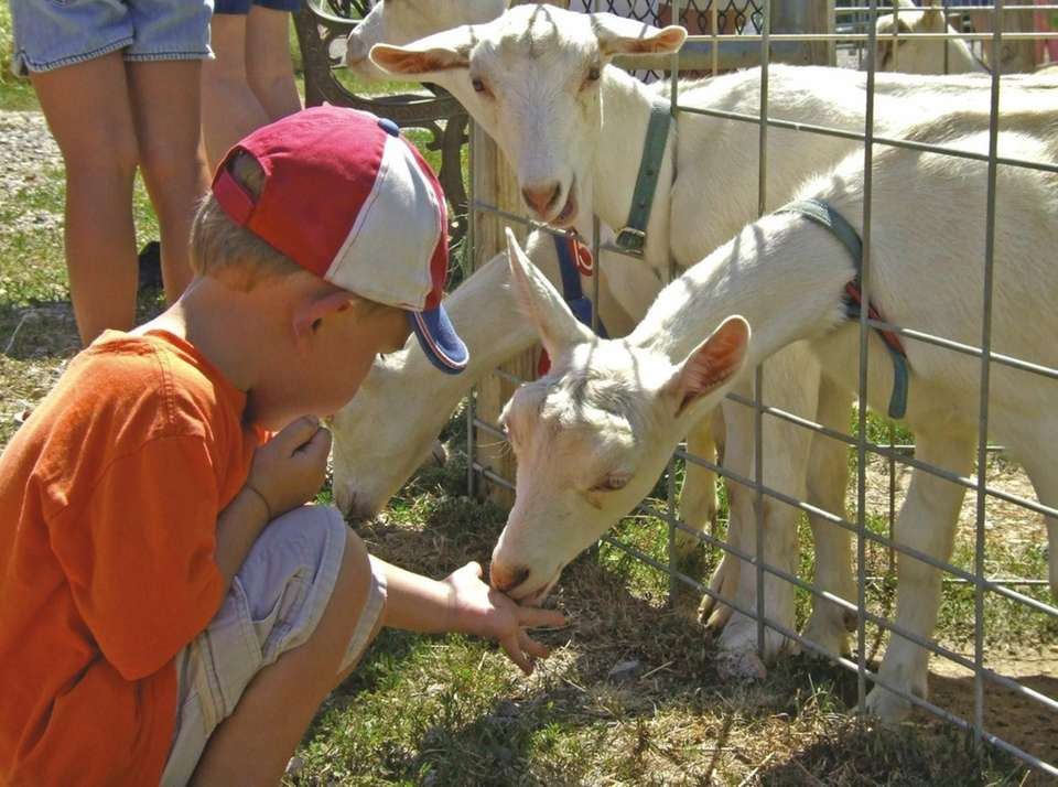 Catapano Dairy Farm has a cheesemaking area where