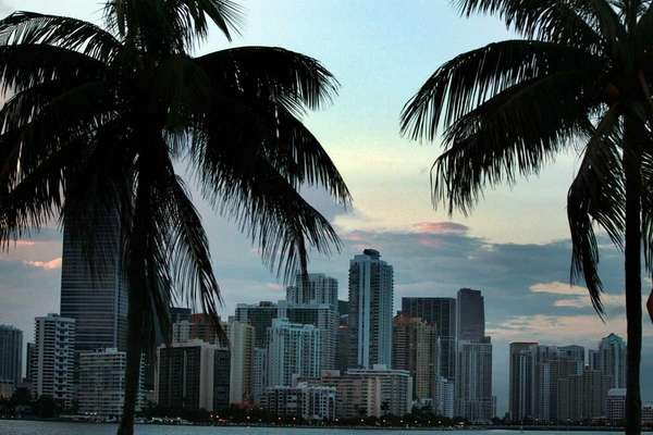 The skyline and palm trees of Miami on