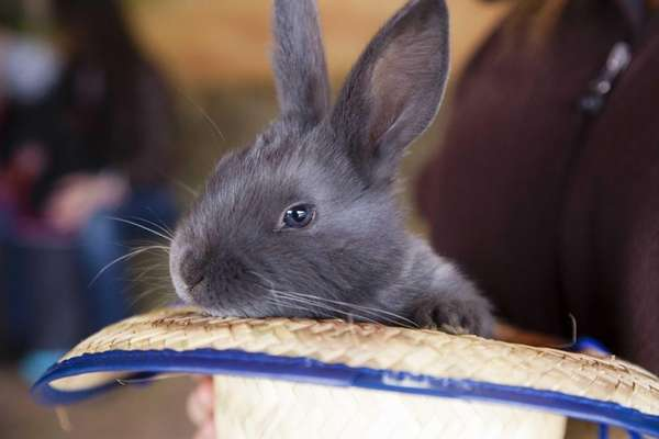 A baby rabbit sits in a straw hat,