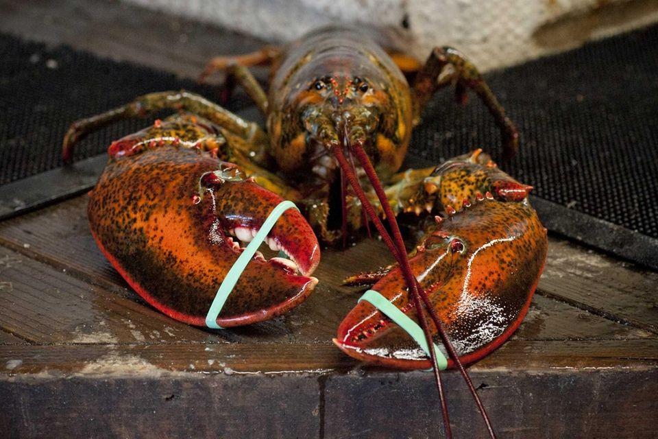 Giant lobster at Jordan Lobster Farms, Island Park: