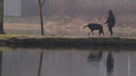 A woman walks a dog in the fog
