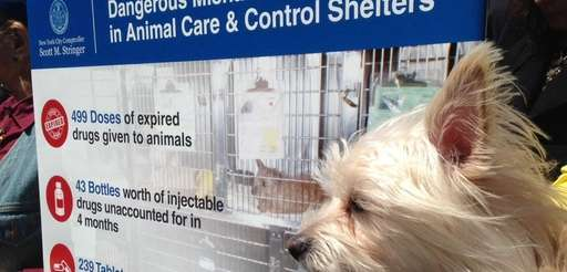 An audit found Animal Care & Control of