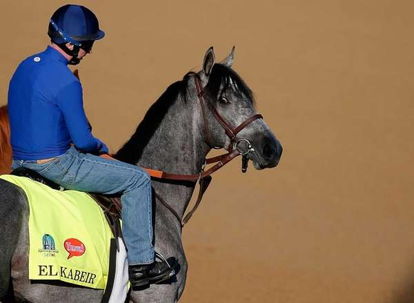 El Kabeir walks onto the track during morning