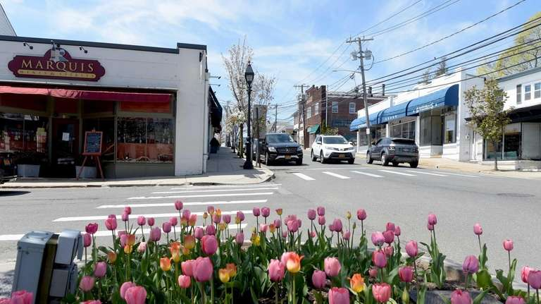 Tulips at the intersection of Birch Hill Road