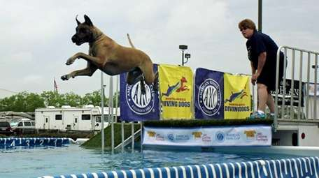 This year's Ladies Kennel Association of America and