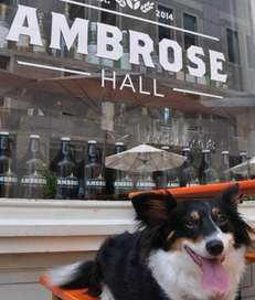 Bring your dog to the bar or cafe!