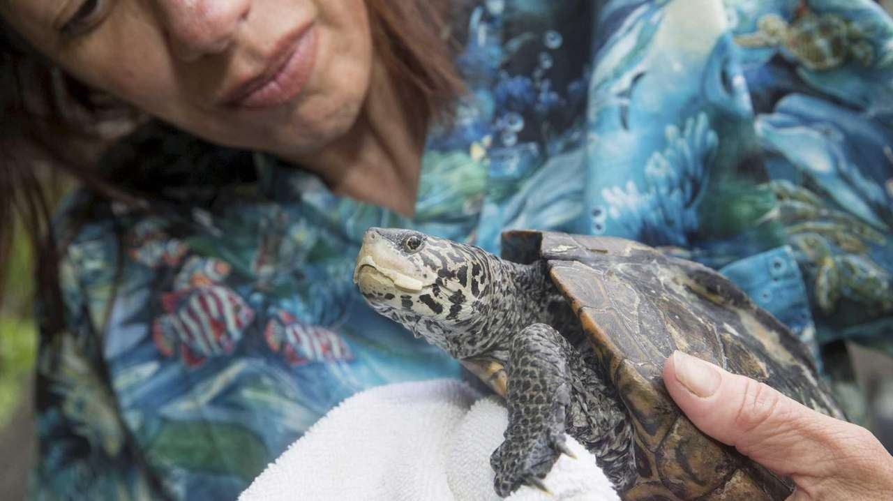 Karen Testa, founder of the Turtle Rescue of