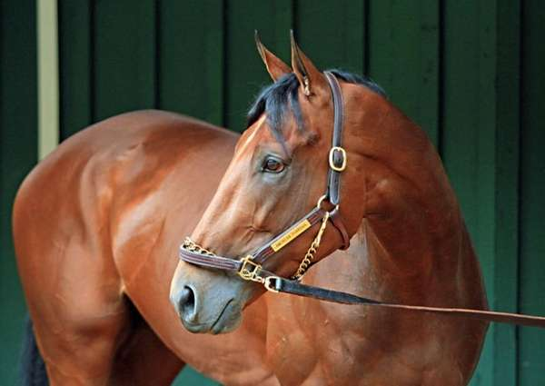 Preakness Stakes winner American Pharoah stops his morning