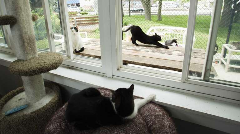 Cats spend the afternoon lounging in the cat