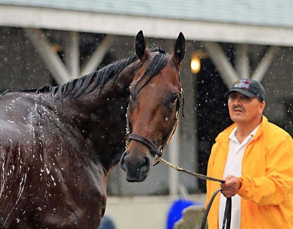 Kentucky Derby and Preakness Stakes winner American Pharoah