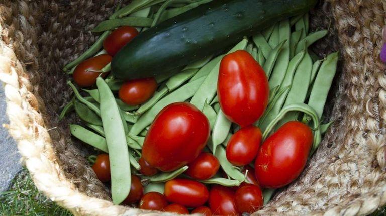Freshly picked vegetables from the garden of Mark