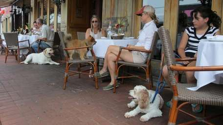 Customers dine with their dogs at outside tables