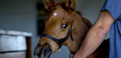 A foal, born from mother Distortion and sired