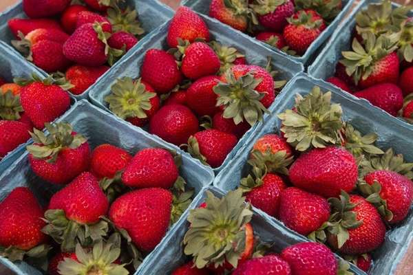 Strawberries are the star attraction at the Mattituck