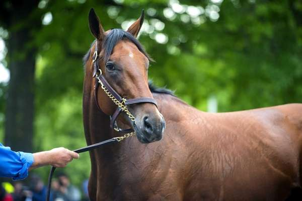 Triple Crown challenger American Pharoah waiting for his