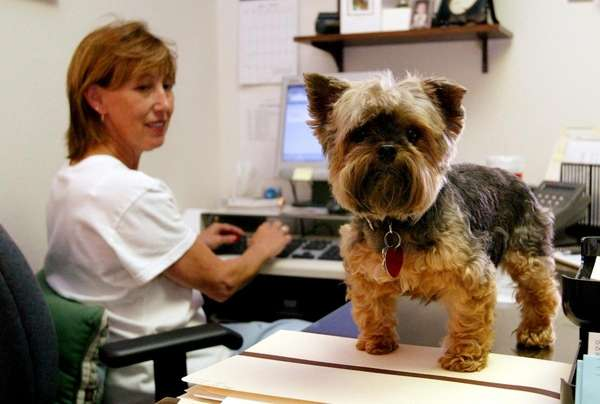 Scruffy investigates a visitor as Vickie Thomas works