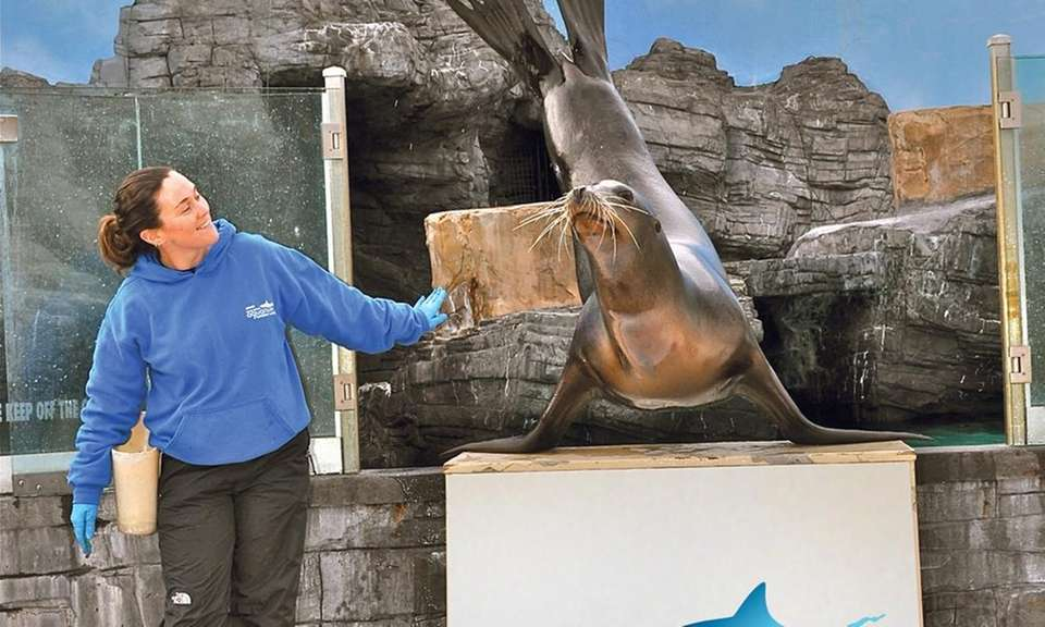 Sea lions Java and Bunker are half brother