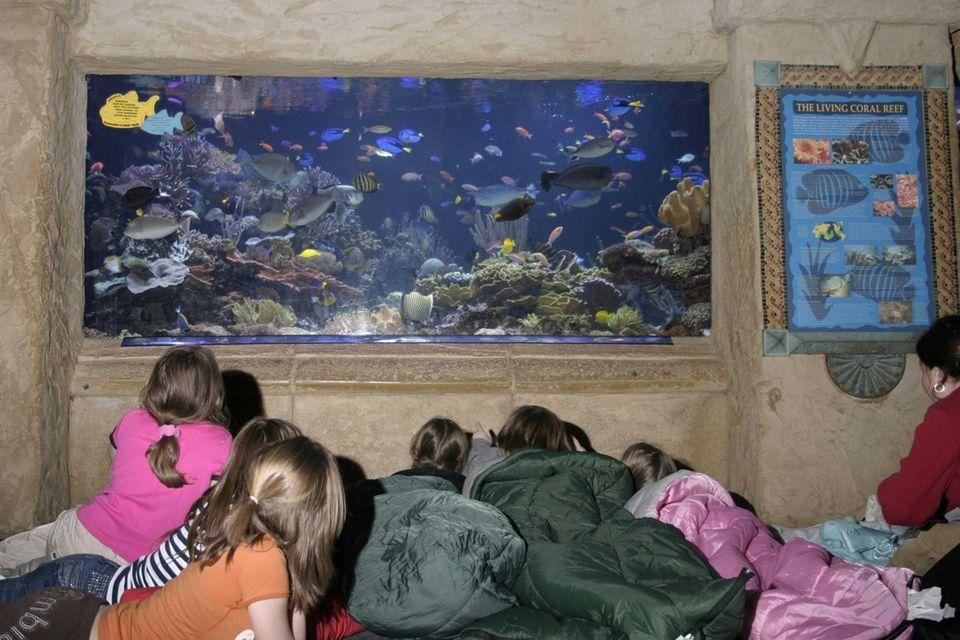 The Long Island Aquarium hosts family-friendly sleepovers throughout