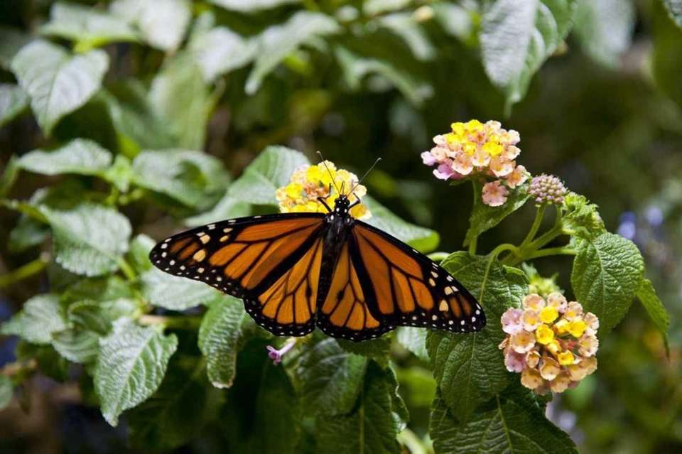 Don't rush through the butterfly exhibit: Instead, look