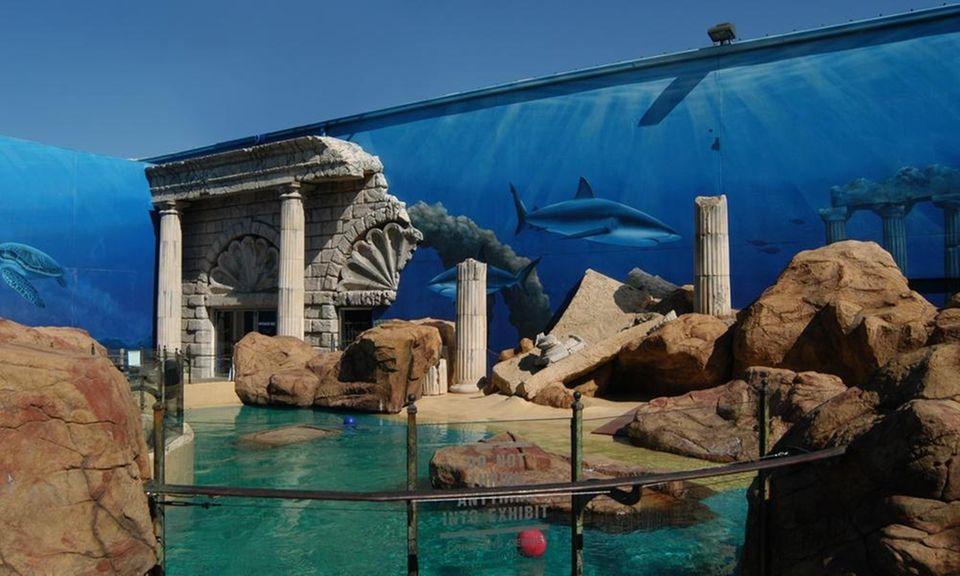 Visit the Long Island Aquarium during your birthday
