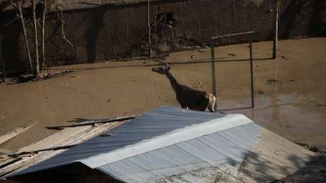 An animal escaped from a flooded zoo stands