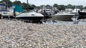 A second large fish kill in two weeks