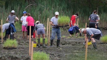 Volunteers plant native grass in Sunken Meadow Park