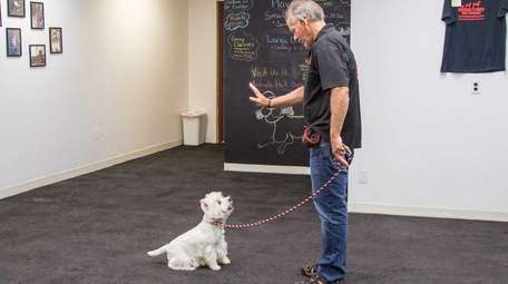 Michael Schaier works with a client's dog, Max