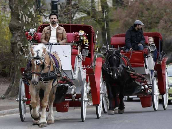 Horse-drawn carriages take riders around Central Park in