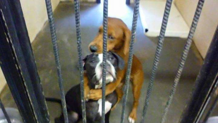 On July 20, Angels Among Us Pet Rescue