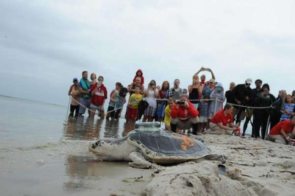 Dr. Doom the sea turtle is released. It