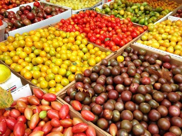 Heirloom tomatoes come in all shapes, sizes and