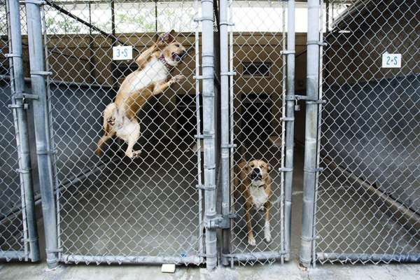 Report recommends extensive renovations for smithtown39s for Ready dog kennel