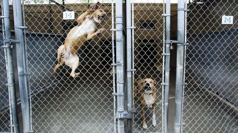 Two dogs ready for adoption spend the afternoon