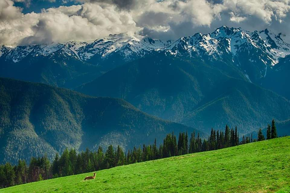 Washington's Olympic National Park has nearly 1 million