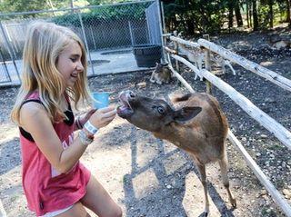 Jade Lichtenstein, 11, from Brooklyn, feeds the Fallow