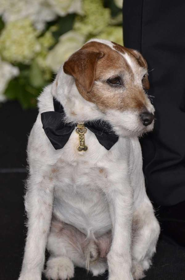 Uggie, one of the stars of the Oscar