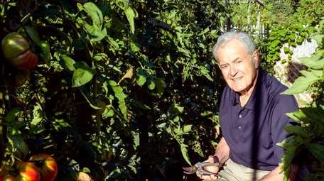 Murray Strongwater, 87, on his wagon prunes tomatoes