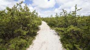 The Long Island Pine Barrens Society will honor