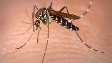 Suffolk County is planning ground spraying Tuesday, weather