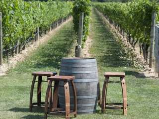 There are 44 Long Island wineries open to