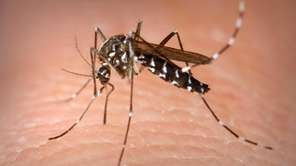 Nineteen new mosquito samples tested positive for West