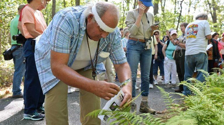 George Stauffer, of Mastic Beach, inspects a fern