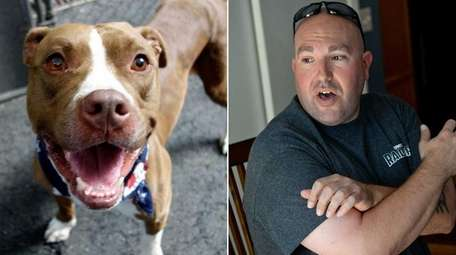 A pit bull adopted by Stephen Neira of