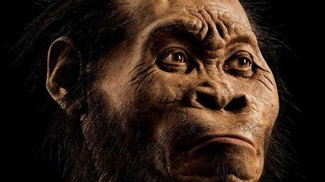 A reconstruction of a Homo naledi face by
