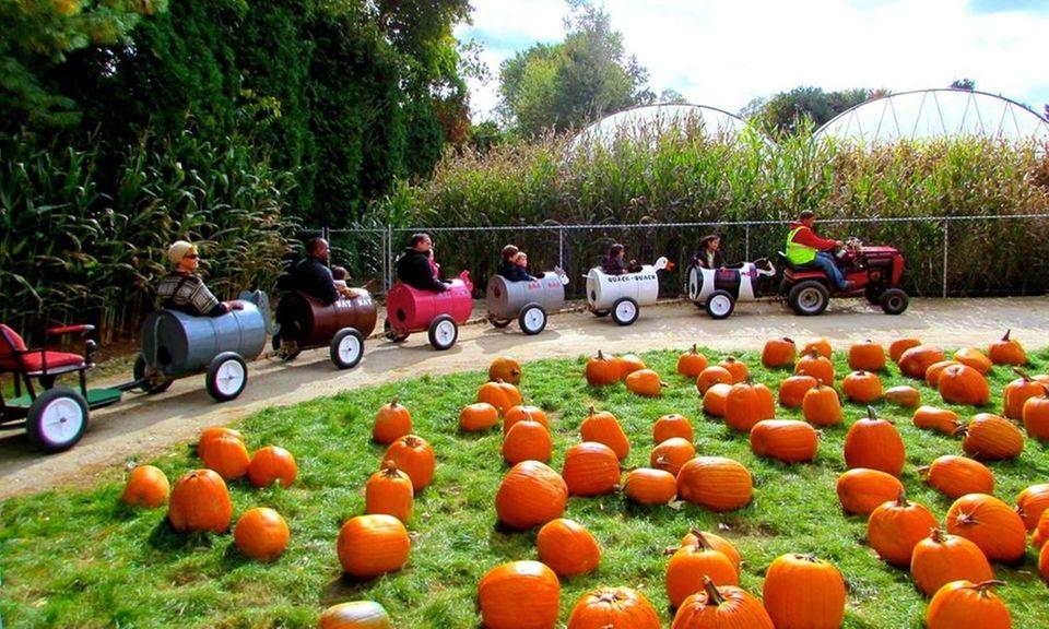 Schmitt Family Farm Fall Festival (6 Bagatelle Rd.