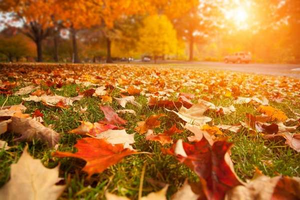 Stock photo of yellow, orange and red autumn